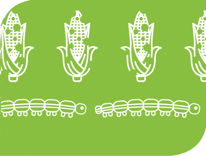 A graphic of destroyed corn and invasive pests.