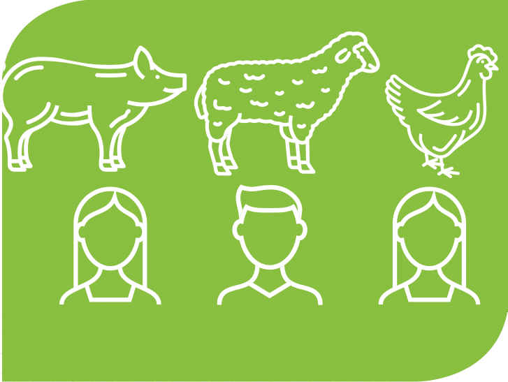 A graphic of a pig, sheep, rooster, and people.