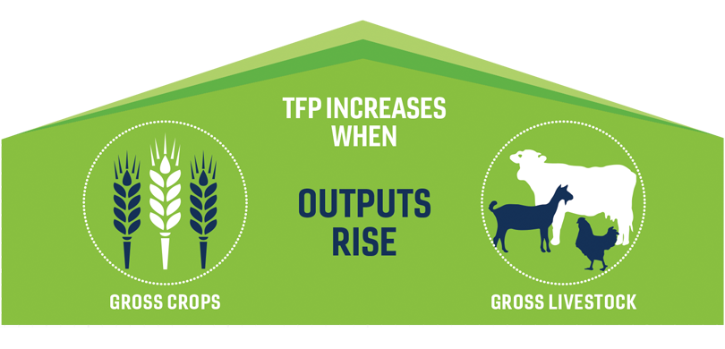 "A graphic that reads ""TFP increases when outputs rise: gross crops, gross livestock."""