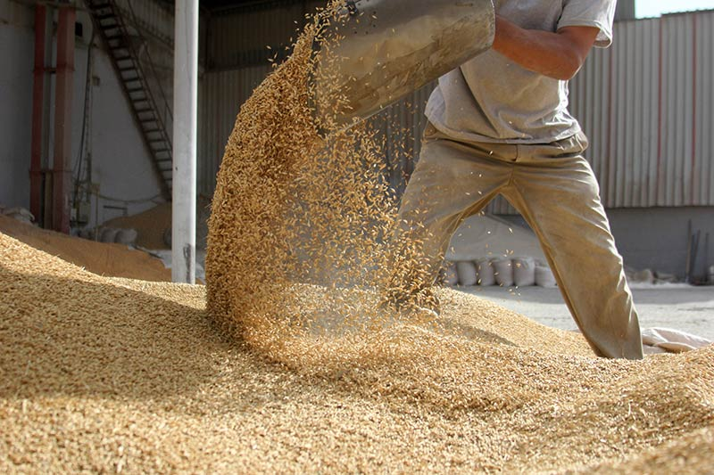 A photo of a worker lifting grains.