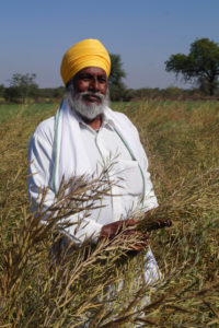 A man wearing a yellow turban stands in a field of mustard crop.
